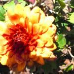 """""""Flower time"""" by adiener"""