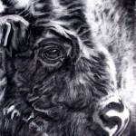 """bison"" by giftportraits"