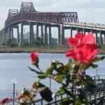 """Roses At The Matthews Bridge Jacksonville Fl"" by wot53"