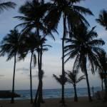 """palms & beach"" by the7son"