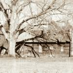 """""""This Old House"""" by PhotographyByRenee"""