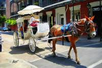 French Quarter Carriage