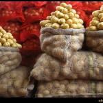 """Batatas"" by ebald"