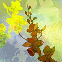 Orchid Shadow 2