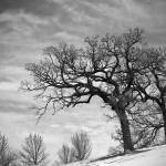 """Winter Landscape - Madison, Wisconsin"" by keithdotson"