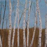 """Birch Trees"" by Rachelheath"