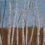 """Birch Trees"" by Rachelheath"