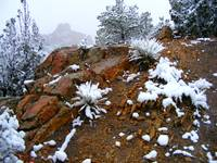 Snow scene in Garden of the Gods