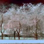 """Winter Trees 5"" by Sari_McNamee"