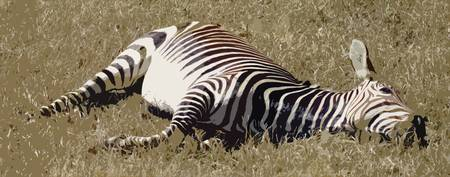 Let Sleeping Zebras Lie (Cutout)