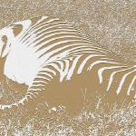 """Let Sleeping Zebras Lie (Papercut)"" by thefirestarter"