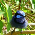 """Bluebird"" by higher-road"