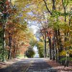 """""""Fall Road"""" by amsole"""