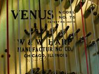 Harp and strings by Venus