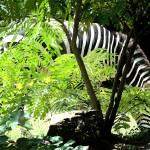 """""""zebra 1"""" by badbeef"""