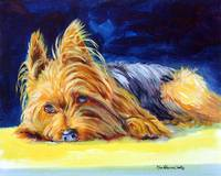 Yorkshire Terrier Sunny Patch