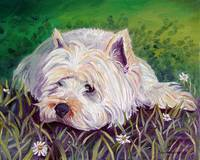 Westie in the Daisy Patch