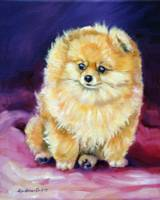 Pomeranian dog, Sweetie Pie