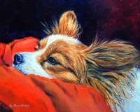 Papillon Dog, Sleepy Head
