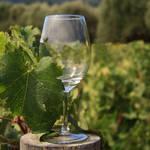 """""""Wine Glass"""" by SueLeonard"""