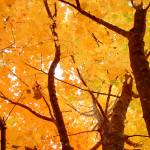 """""""The Fall Color"""" by atta"""