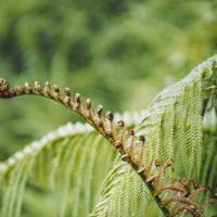 """Fern Abstract"" by Brian Hudson"