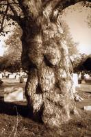 Saint Michael's cemetery (face in the tree) (Lynn