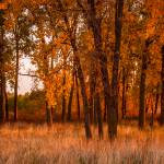 """Morning Light"" by ZeipekisPhotography"