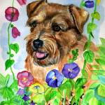"""Norfolk Terrier, In the Flowers"" by wally_doodle"