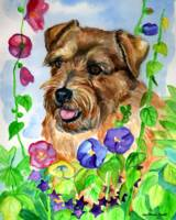 Norfolk Terrier, In the Flowers
