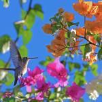 """""""Hummingbird 5"""" by robbdee40"""