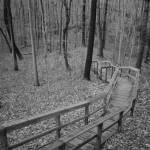 """Steep Wooden Boardwalk along Nature trail in Black"" by JimNesterwitz"