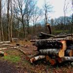 """logging"" by simonart"