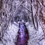 """Winter Forest"" by 4colourprogress"
