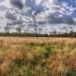 """Salcey Forest"" by 4colourprogress"