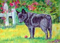 Schipperke Dog, The Red Ball