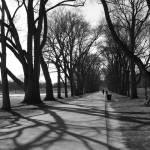 """""""Shadows"""" by atta"""