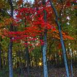 """October Sunrise in Hocking Hills by Jim Crotty 15"" by jimcrotty"