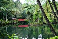 Rainforest lake with Red Bridge