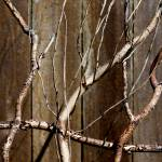 """""""Abstract Branches"""" by IanGill"""