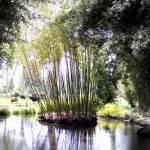 """""""Bamboo Island"""" by catlova"""