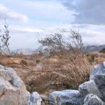 """Desert Terrain-8"" by versaillesexquisites"