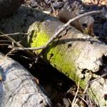 """""""Mossy Oak"""" by fruitfinds"""