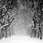 """Blizzard Central Park"" by ArtisticPhotos"