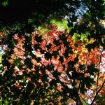 """Autumn Canopy 1"" by NorthPointImages"