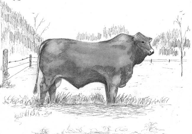 drawing quotcattlequot artwork for sale on fine art prints