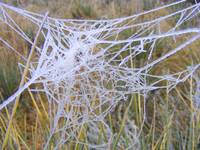 Frozen Dew on Spiders Web 2756