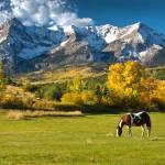 """Mountain Grazing"" by pbk"