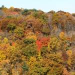 """Foliage Along the Hudson River Near Highland New Y"" by sfg165"