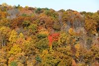 Foliage Along the Hudson River Near Highland New Y